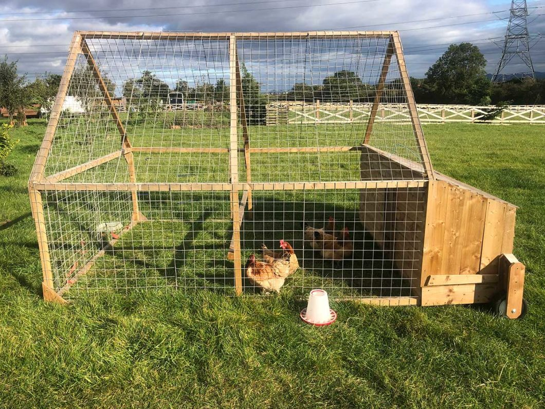 Why Are Chicken Tractors The Best Way To raise Your Chickens